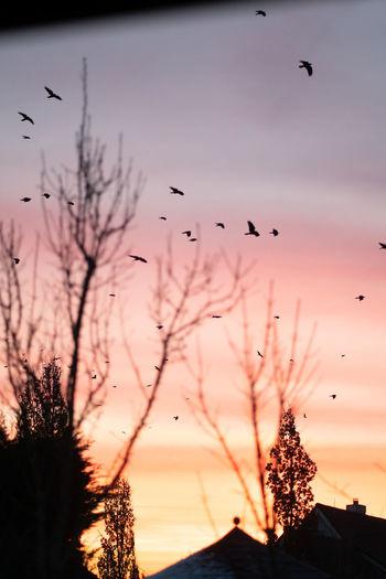 Silhouette birds flying in the sky