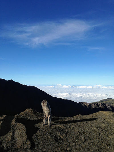 Desertic EyeEmNewHere Hiking INDONESIA Trekking Animal Gunungrinjani Landscape Lombok Monkey Mountain Sky Volcano