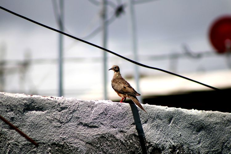 Close-up of bird perching on a house