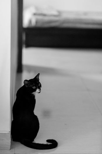 Animal Animal Themes Black Color Cat Domestic Domestic Animals Domestic Cat Feline Flooring Full Length Home Interior Indoors  Looking Mammal No People One Animal Pets Relaxation Sitting Vertebrate Whisker