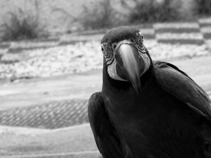 Animals, black and white. Travel Animal Themes Animal Wildlife Animals Animals In The Wild Bird Black And White Blackandwhite Photography Close-up Day Focus On Foreground Macaw Nature No People One Animal Outdoors Pet Photostreet Streetphotography