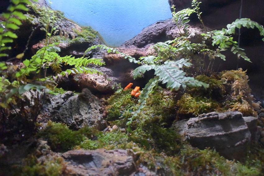 Aquarium Frog Sea Life Aquarium