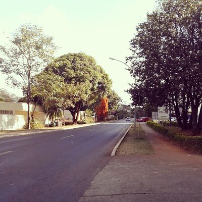 Streetphotography City 2.0 - The Future Of The City City View  Trees
