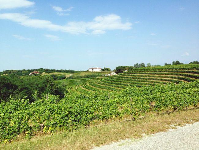 Traveling Vineyard Italy