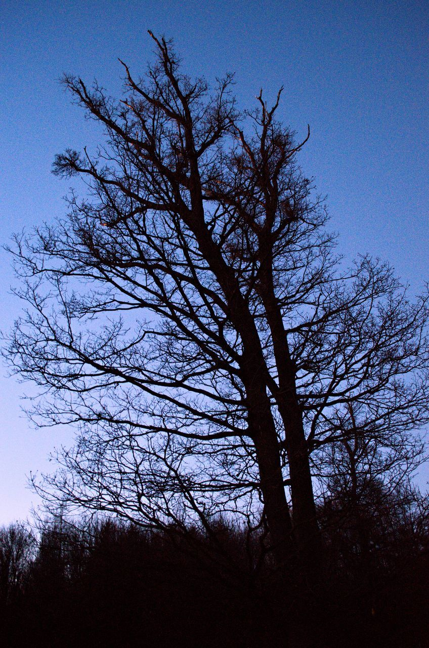 tree, low angle view, branch, nature, silhouette, no people, bare tree, beauty in nature, tranquility, sky, growth, outdoors, scenics, day, clear sky