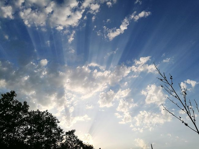 Tree Sky Nature Cloud - Sky Outdoors No People Low Angle View Blue Beauty In Nature Sunshine Ray Of Sunlight
