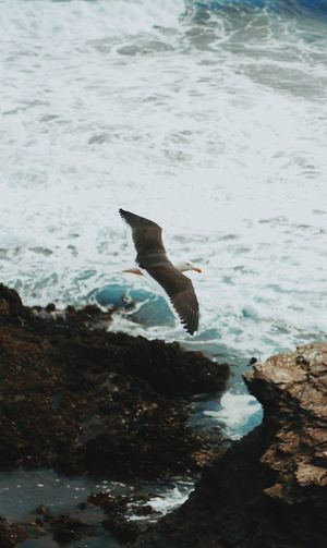Animal Animal Themes Animal Wildlife Animals In The Wild Bird Day Flying Marine Motion Nature No People One Animal Outdoors Rock Rock - Object Sea Sea Life Seagull Solid Underwater Vertebrate Water