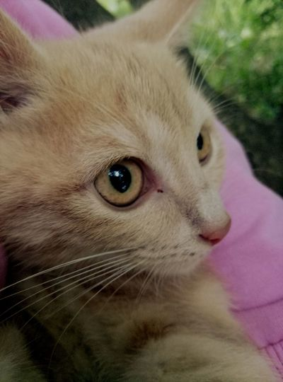 Domestic Cat Pets Domestic Animals Portrait Looking At Camera Eye Animal Themes One Animal Feline Cute Close-up Whisker Mammal No People Kitten Outdoors Day
