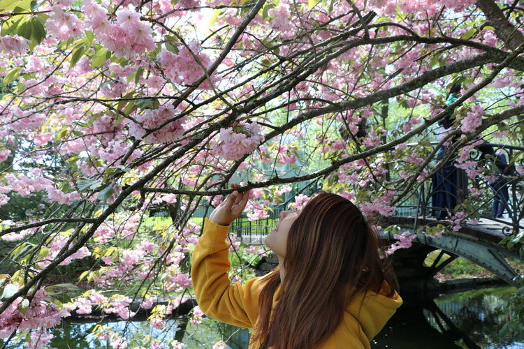 Flower Plant Tree Flowering Plant One Person Real People Leisure Activity Lifestyles Beauty In Nature Nature Fragility Women Blossom Growth Freshness Springtime Rear View Day Hairstyle Hair Pink Color Outdoors Cherry Tree Cherry Blossom Human Arm