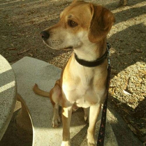 Brutus Mascotas 🐶 Amor A Los Animales Cute Pets Dogs Animals
