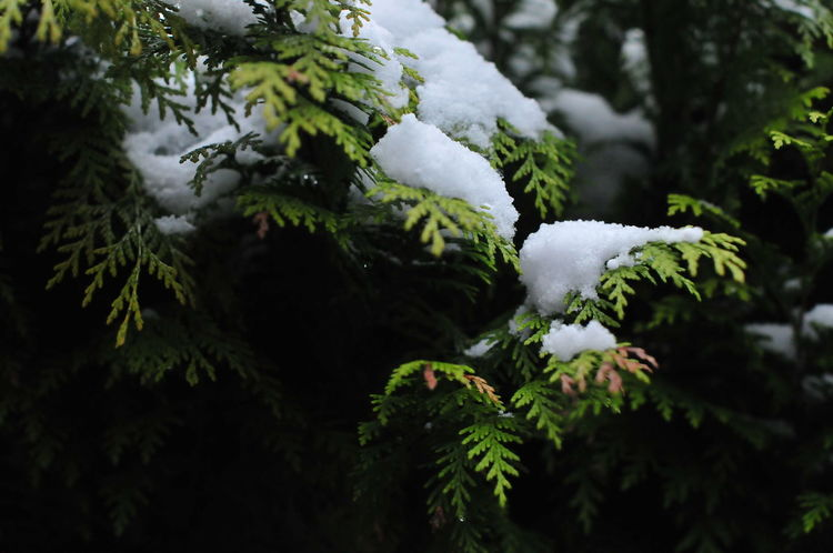No Filter Enjoying Life In The Forest 50mm 1.4 Beautful Snow Naturelovers Winter Trees Wintertime Winter