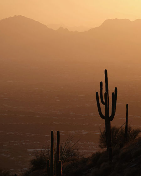 Saguaro silhouettes stand out against yellow, orange, and mountains during an iconic arizona sunset