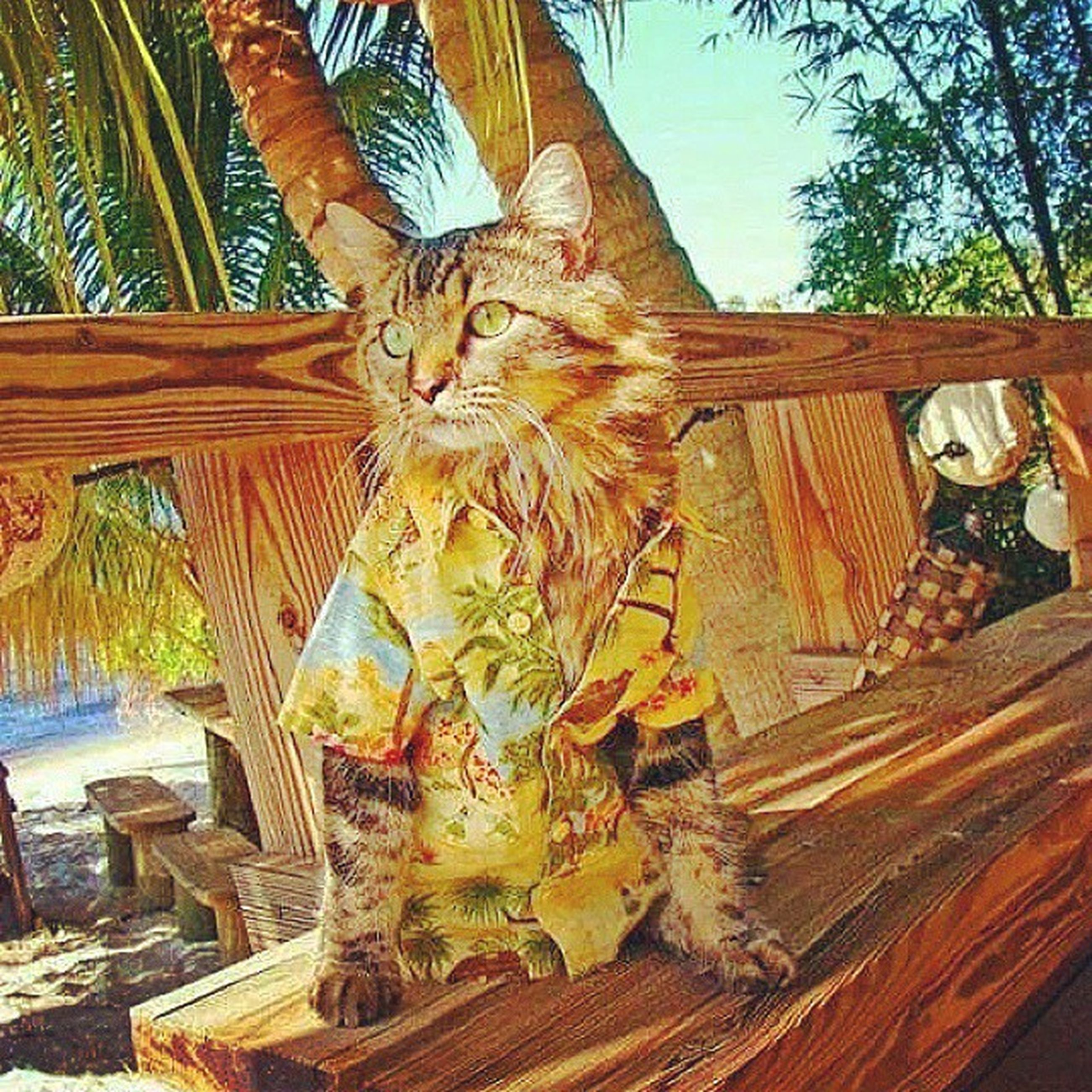 tree, art and craft, art, wood - material, domestic cat, creativity, animal representation, built structure, sculpture, cat, day, statue, one animal, no people, feline, sunlight, animal themes, architecture, relaxation, palm tree