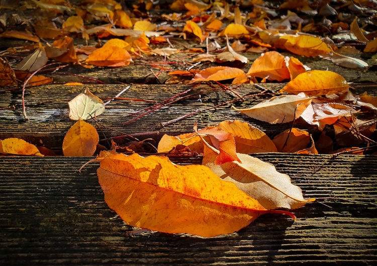 Close-up of dry maple leaves on wood during autumn