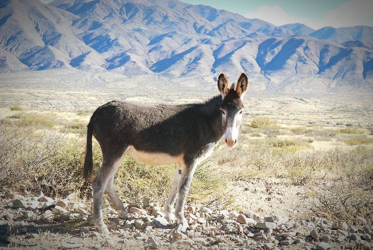 Argentina Mountains Landscape Nature Beauty In Nature Travel Destinations Donkey