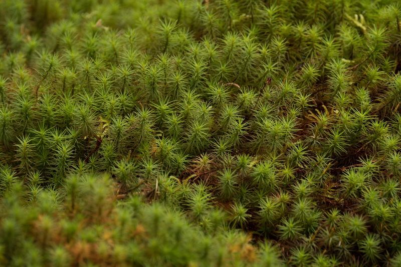 Beautifully Organized Green Color Plant Beauty In Nature Eye Em Nature Lover Japan Moss