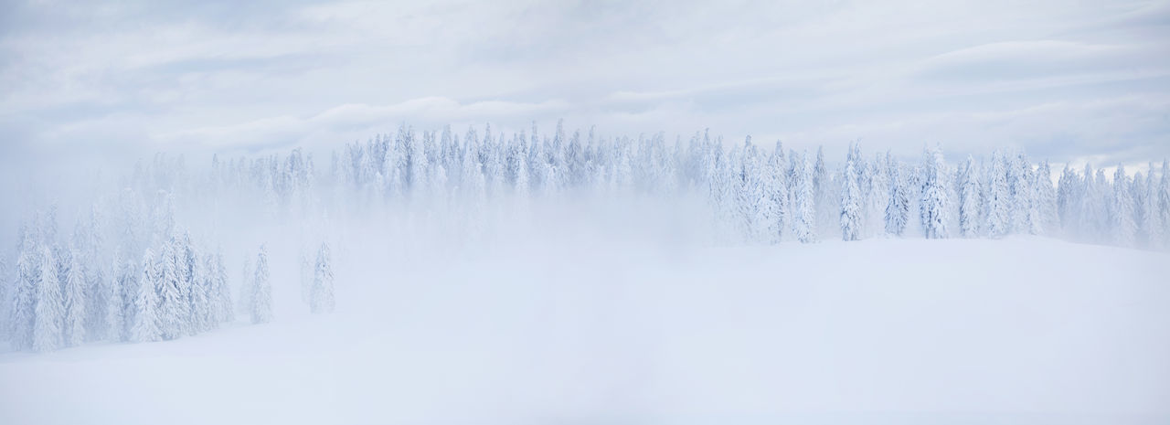 Foggy winter morning in Rodnei Mountains, Romania. Beautiful Carpathians EyeEm Best Shots EyeEm Nature Lover Misty Morning Nature Panorama Trees View Winter Beauty Cold Temperature Fog Foggy Landscape Mist Mountain Mountain Range Mountains Outdoors Pine Tree Season  Snow