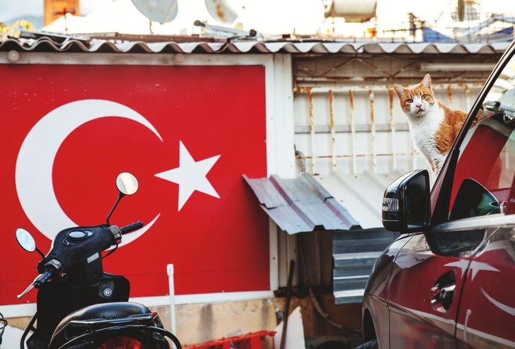 Turkey Motorbike турция Alanya Turkey Türkiye Turkishfollowers Turkish Flag Turkish Style  Cat City Red Architecture Building Exterior Built Structure Road Sign One Way Stop Sign Bicycle Lane Red Light Traffic Light