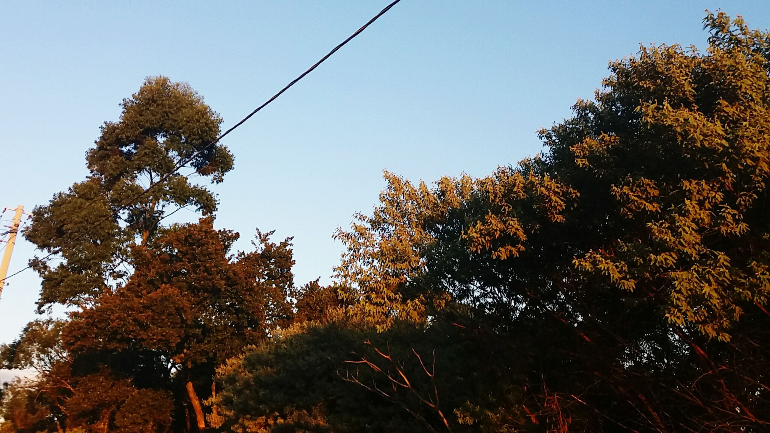 tree, low angle view, clear sky, growth, nature, branch, beauty in nature, tranquility, sky, outdoors, silhouette, no people, autumn, day, sunlight, blue, scenics, tranquil scene, change, high section