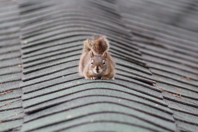High angle view of squirrel on metal