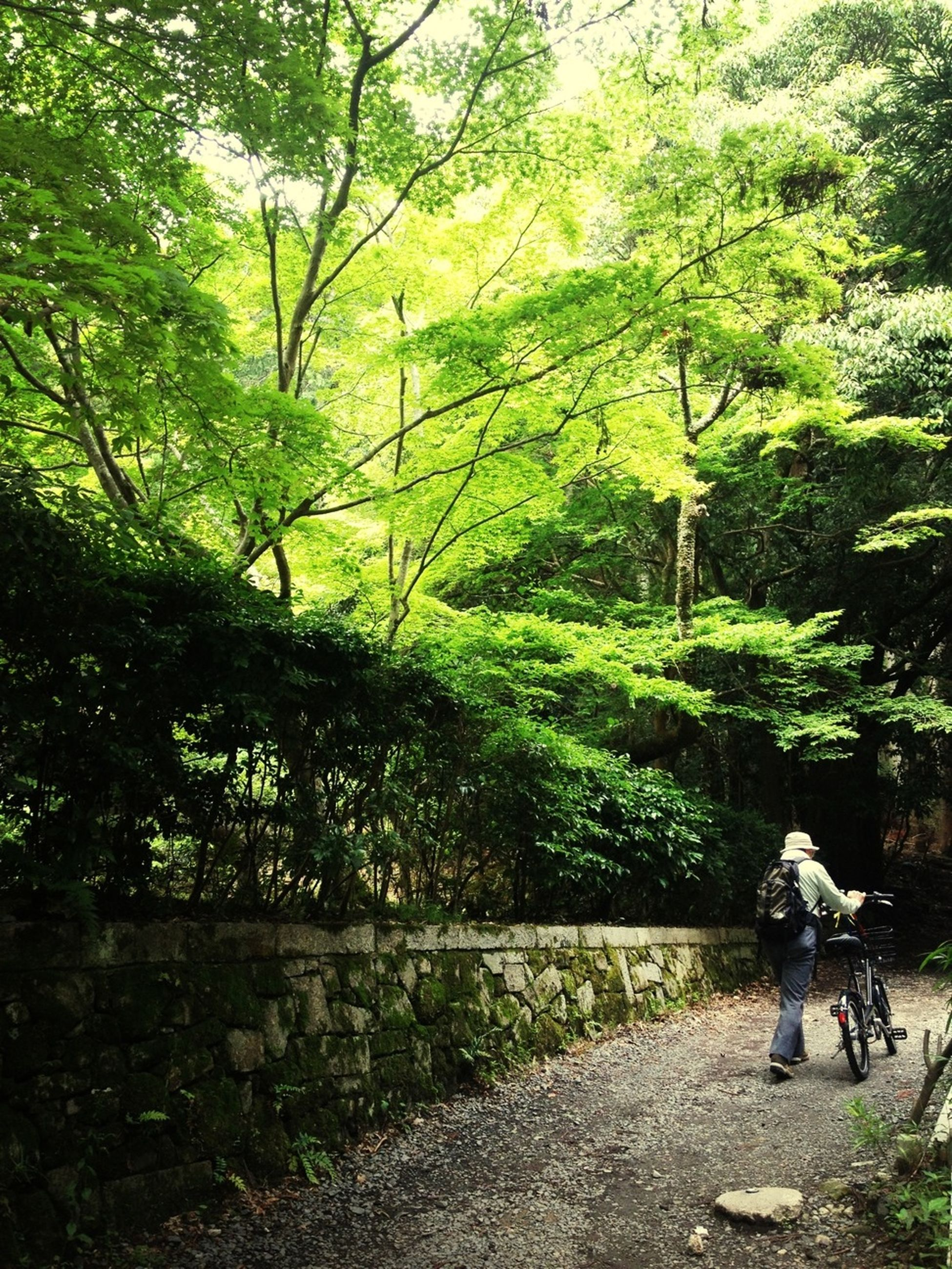 tree, lifestyles, leisure activity, full length, men, rear view, casual clothing, growth, bicycle, forest, person, nature, walking, tranquility, riding, standing, day