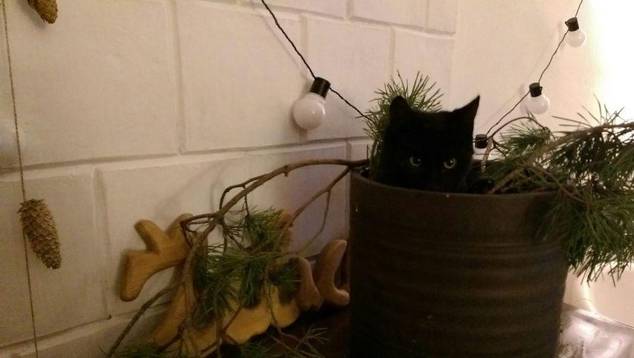 Always Be Cozy Christmas Tree Black Cat Cat Indoors