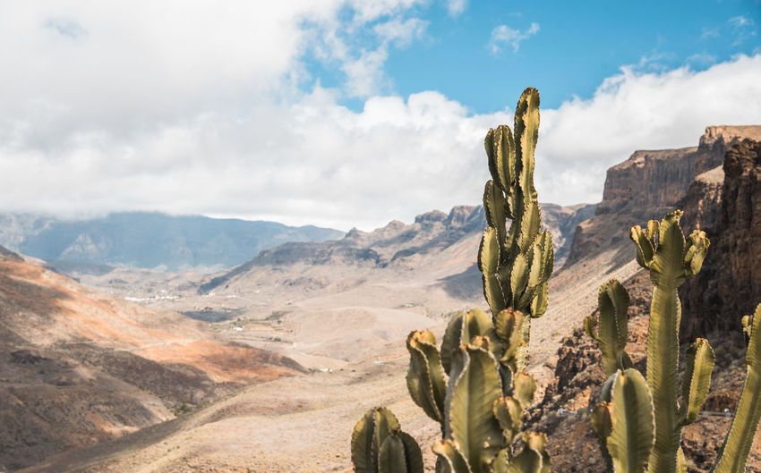 Cactus growing on mountain against cloudy sky
