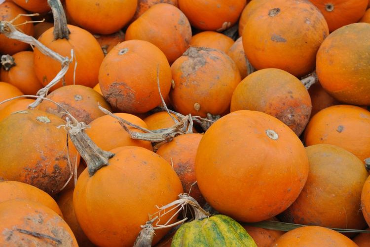 Batch of pumpkins EyeEm Selects Food And Drink Food Healthy Eating Fruit Wellbeing Orange Color Full Frame For Sale Abundance Large Group Of Objects Freshness No People Backgrounds Close-up High Angle View Day Market Retail  Still Life Vegetable