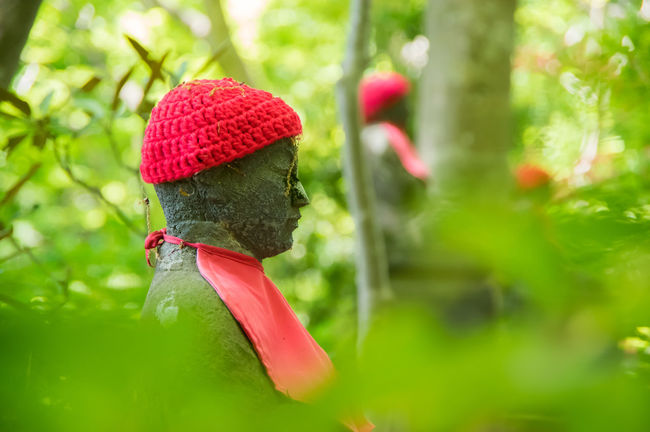 Black Color Close-up Day Focus On Foreground Green Color Growth Japan Jizou Multi Colored Nature Nit No People Outdoors Profile Red Selective Focus Shrine Tera Tradisional Woods