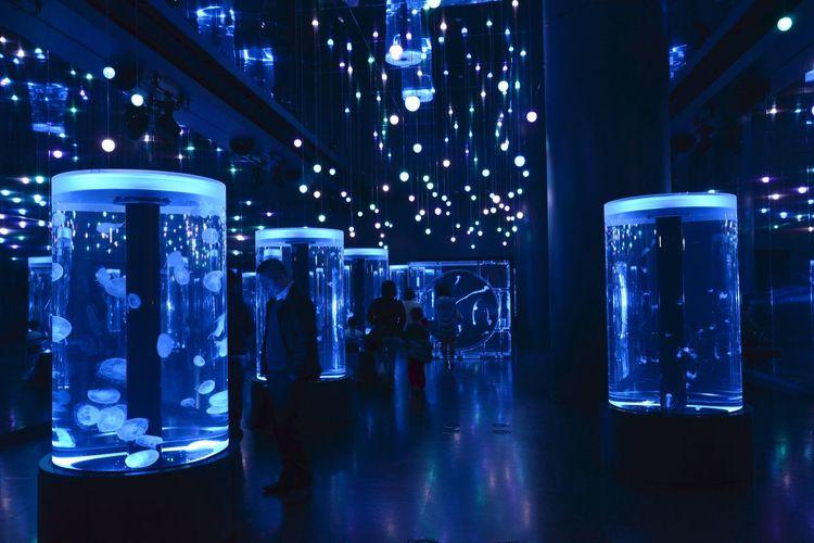 Aquarium Tokyo