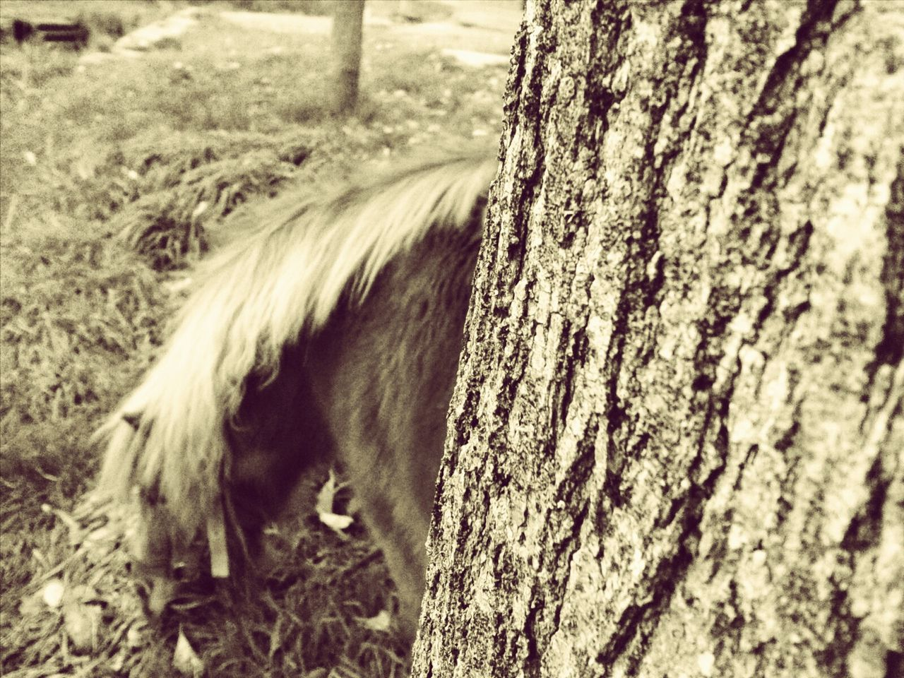 animal themes, domestic animals, mammal, day, one animal, no people, tree trunk, outdoors, livestock, nature, grass, tree, close-up