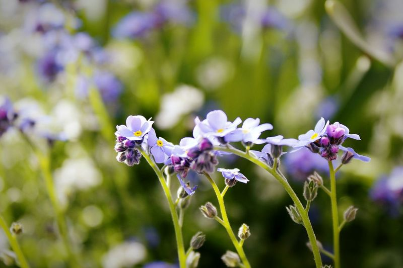 EyeEmNewHere Purple Beauty In Nature Flower Outdoors Freshness Tiny Flowers Visual Delight Cute Nature_collection Macro Photography