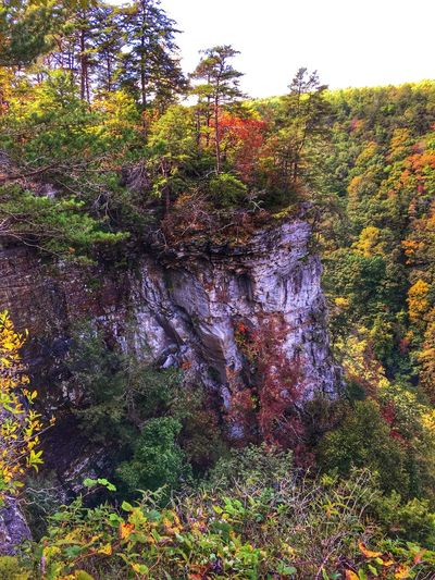 Hiking Nature_collection Fall Colors Tadaa Community Cloudland Canyon.