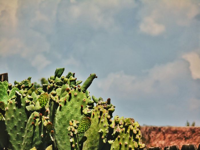 High angle view cactus of against sky