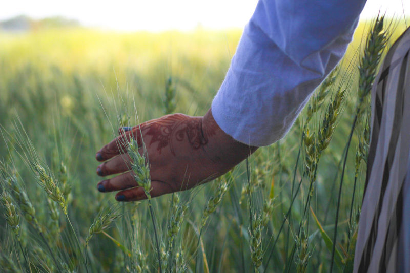 Free world - dreeming Alone Carefree Showcase March Day Detail Farm Field Focus On Foreground Freedom Grass Green Green Color Growing Growth Individuality Leaf Mahendi Morning Light My World Nature Outdoors Plant Relaxation Selective Focus Zoology