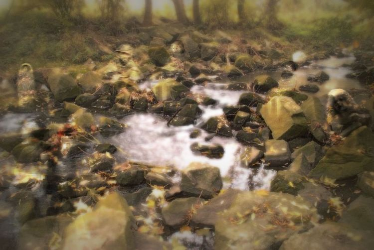 Spooky autumn Nature No People Day Outdoors Close-up Ghosts? Water Stones & Water Stones N Rocks