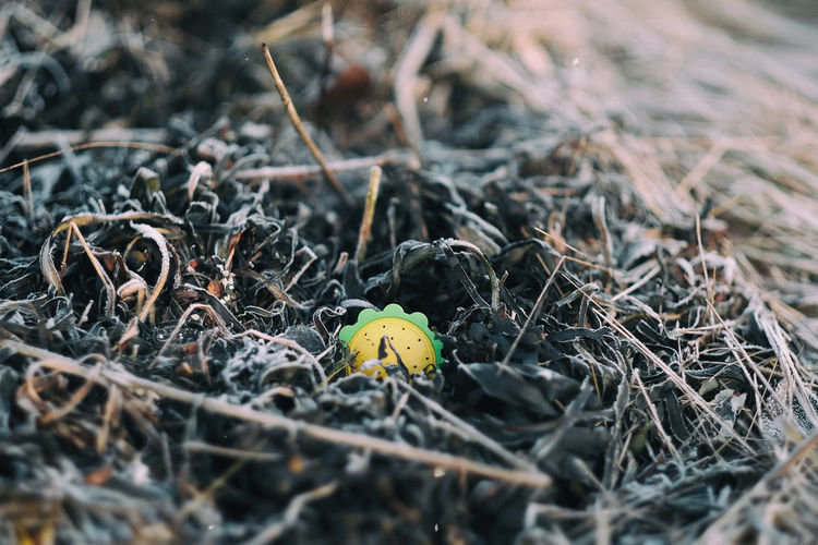 Close-Up Of Toy Amidst Wilted Plants On Field