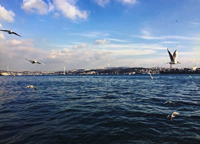 Animals In The Wild Sea Bird Flying Animal Wildlife Nature Water Fish Sky Seagull Spread Wings Cloud - Sky Day No People Outdoors Turkey Istanbul Istanbul Turkey