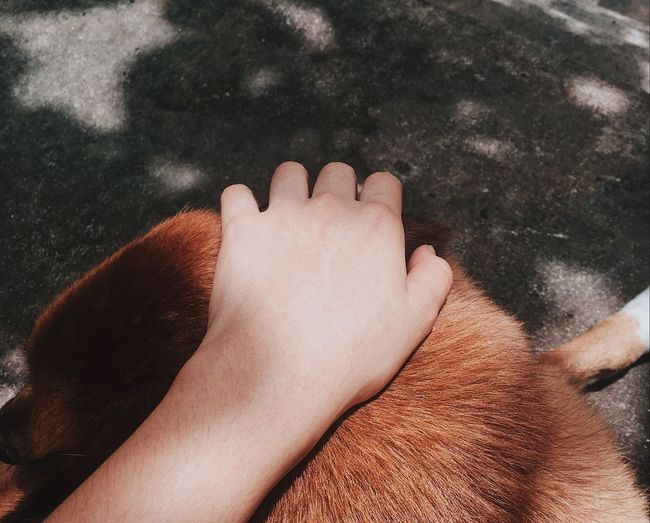 Cropped hand touching dog