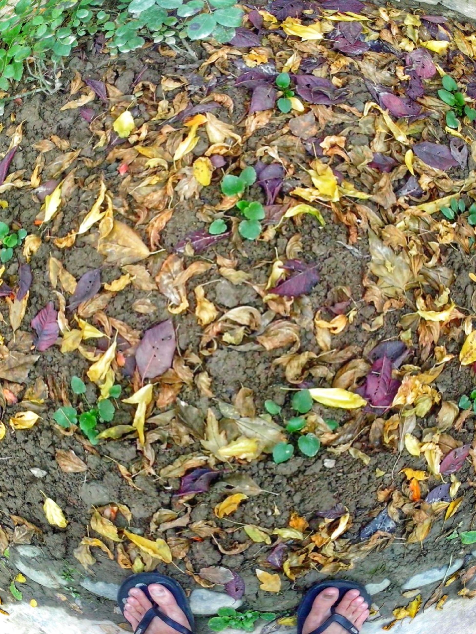 low section, person, leaf, personal perspective, high angle view, autumn, change, leaves, shoe, fallen, unrecognizable person, standing, dry, lifestyles, season, human foot, leisure activity