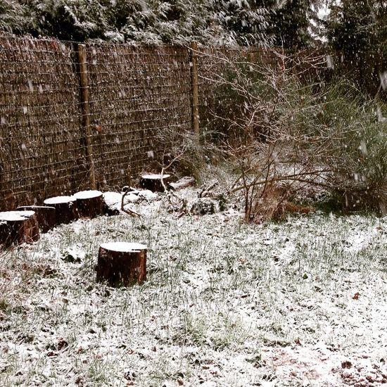 Il neige en #Sologne...