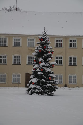 Tree in front of building during winter