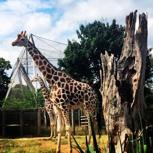 London Zoo Summer Hello World Taking Photos Photo Animals Traveling Relaxing Friends