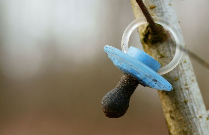 Used pacifier hanging on a tree Childhood Babies Sooth Sorrow Babies Pacifier No People Hanging Close-up Focus On Foreground Tied Up Day Indoors  Nature