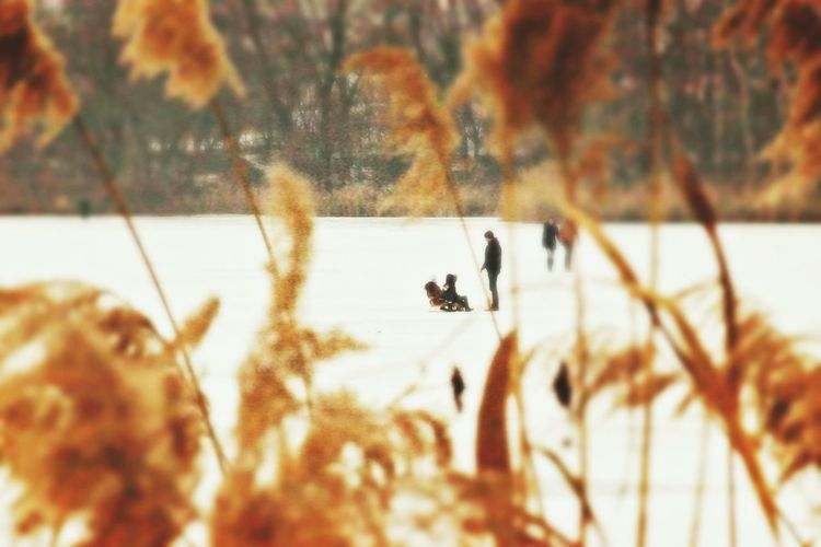 Wintertime Winter Sports Winter Sports On The Frozen Lake FatherSonMoments Shades Of Orange Shades Of White Mobile Conversations