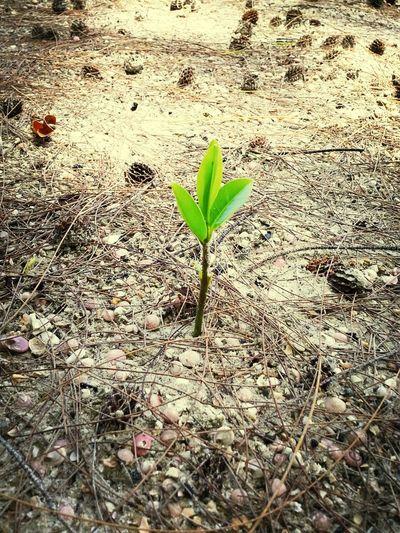 แค่ต้นไม้ต้นเดียวจะสู้ทนแรงลมไหมหรอ