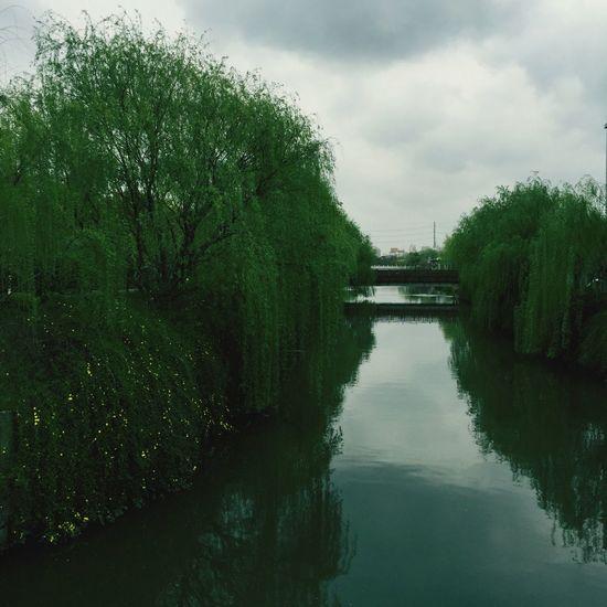 Trees River Bridge Riverside