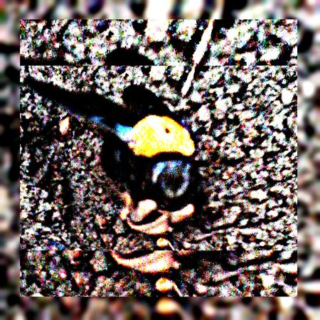 Macro Beauty HDR Effect Maskingbeauty Bugslife Bug Hunting Image Overlaying Mobile_photographer Bug Portrait Buggy Overlay Bugs My Best Photo 2016 Showcase : January Getty Images Deceptively Simple Squarefit Square Format Lovers Hello World