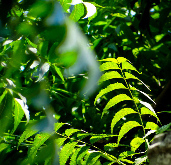 GREENERY Branches Of Trees Rich Green Tones Natural Pattern Nature Lush Foliage Lush - Description Greenery Scenery Leaf Tree Close-up Plant Green Color Tropical Rainforest Greenery Tree Canopy  Woods