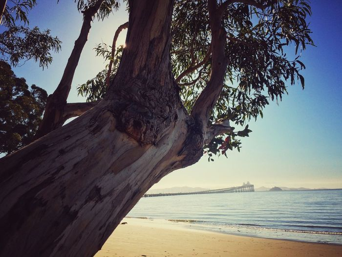 EyeEm Best Shots Beauty In Nature Sea Beach Tree Beauty In Nature Nature Scenics Water Tree Trunk Horizon Over Water Sand Tranquility Tranquil Scene Outdoors Sky Vacations No People Day Branch Sommergefühle